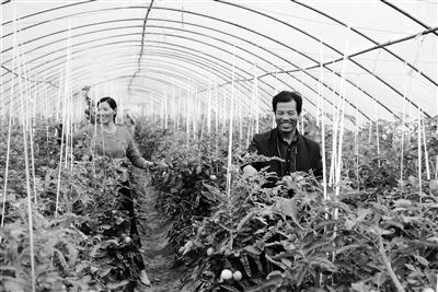 """天水清水县:蔬菜大棚好""""钱""""程"""