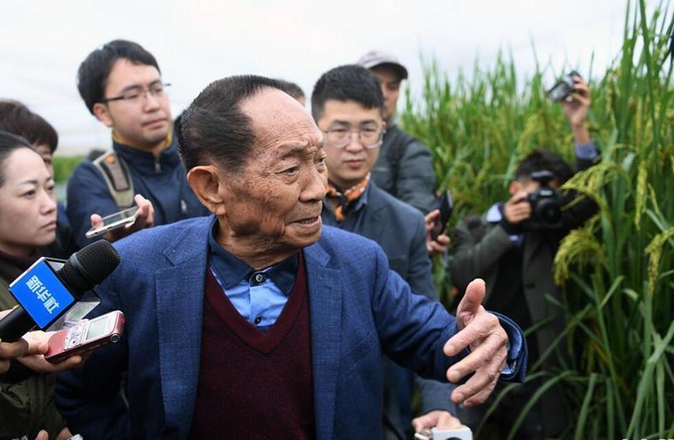 """""""巨型稻""""2.2米高 中科院推出高产水稻新种质"""