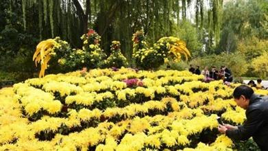 金秋十月兰州4万余盆菊花竞相开放