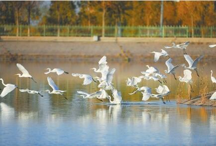 酒泉市阿克塞金山湖迁徙鸟类如期而至
