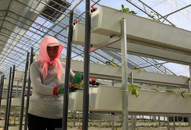 宁夏彭阳:科技化温棚种植富民利农