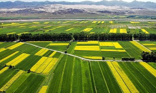 """甘肃省将大力推进农业生产托管 解决""""种不了地""""""""种不好地""""和""""无人种地""""等问题"""
