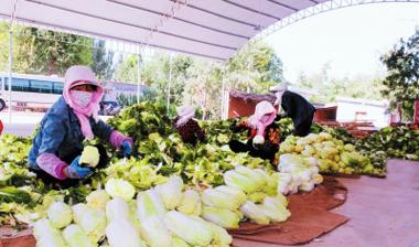 """张掖临泽县着力打造""""一园三带四基地""""蔬菜产业发展格局"""