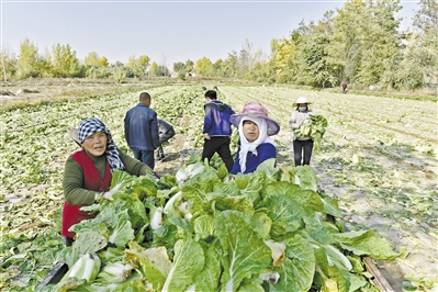兰州市中龙公路沿线土门川村民种植的蔬菜喜获丰收(图)