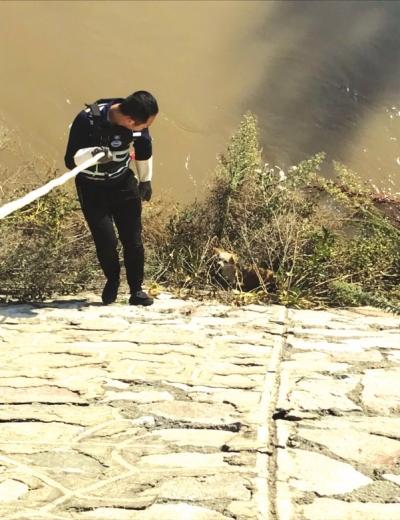 兰州:流浪狗掉下河堤志愿者协力救助