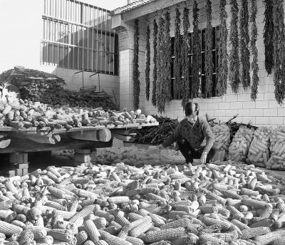 平凉华亭县推广旱作农业实用技术 促进农民增收(图)