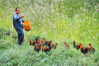 白银市靖远县积极鼓励和引导农民发展林地立体复合经济