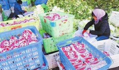 【记者关注】甘肃高原夏菜铺就致富路