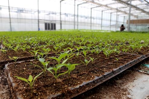 天水武山大力发展蔬菜产业 22万人直接受益(图)