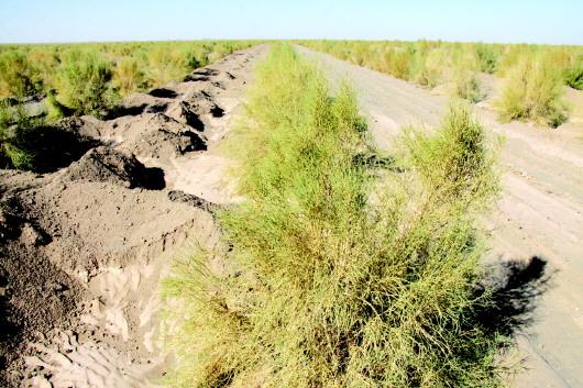 绿色梦 在巴丹吉林沙漠放飞——记大漠农林生态产业股份公司荒漠化治理项目