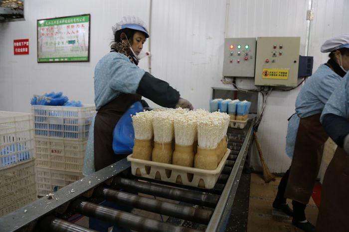 【领航新征程】天水众兴菌业:食用菌已成为现代农业的特色产业(图)