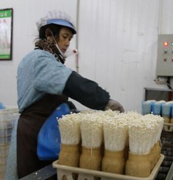 天水众兴菌业:食用菌已成为现代农业的特色产业