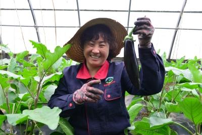 """榆中县""""互联网+设施农业""""发展模式"""
