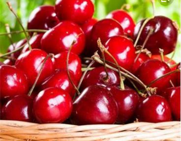 天水水果出口持续高增长
