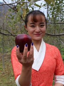 """【领航新征程】迭部县水泊沟村:""""高原苹果""""成为群众增收果(图)"""