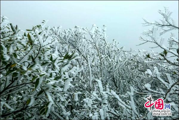 湖南南山国家公园迎今冬首场雾凇 景色如画