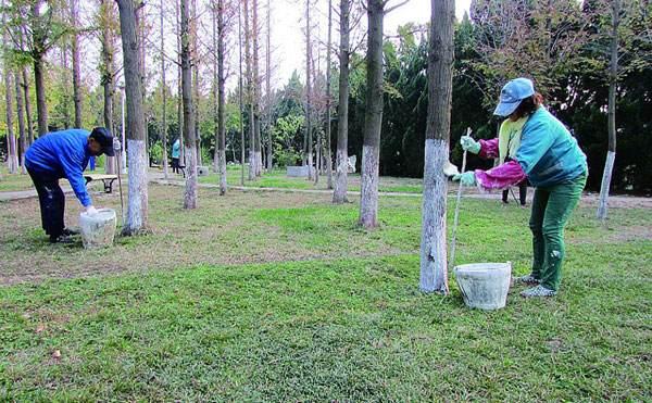 金昌市金川区绿化局多举措确保园林植物安全越冬