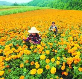 甘肃省统计局发布1至10月全省经济运行情况 前10月城镇新增就业41.16万人