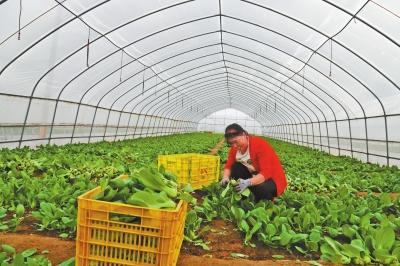白银市会宁县加大力度培育富民支柱产业