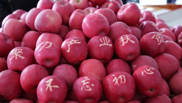 """平凉市静宁县:产业助推脱贫攻坚 看苹果树变""""摇钱树""""(图)"""