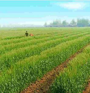 到2020年甘肃省确保建成932万亩高标准农田