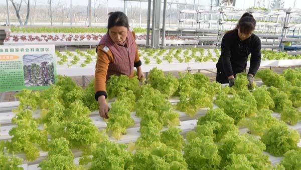 甘肃临夏:科技园区引领 促进农业产业升级