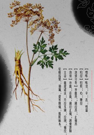 甘肃省发布31种大宗道地中药材地方标准