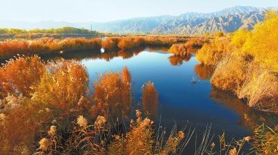 临夏州永靖县太极岛黄河湿地景色迷人