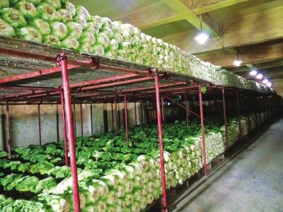 兰州:万吨冬春储备菜收储到位啦