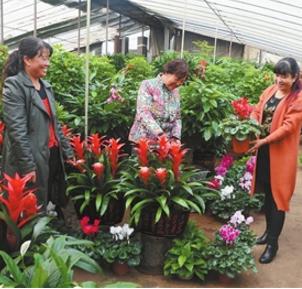 临夏州临夏市花卉市场迎来销售旺季