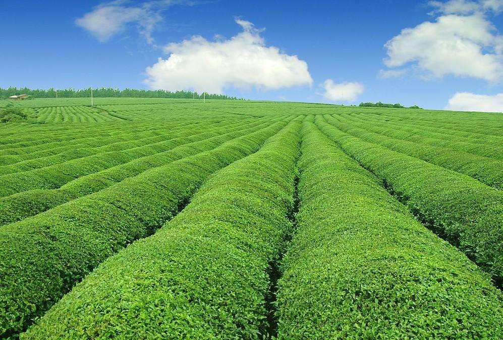谱写现代农业发展精彩华章——甘肃省现代农业发展综述
