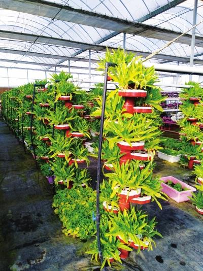 物联网让农业智慧运营 兰州市榆中县力争粮食总产量稳定在1.7亿公斤以上