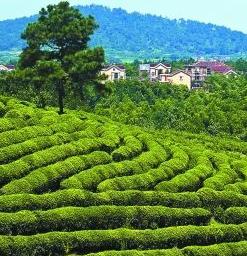 【生态】林铎:坚决抓好生态建设和环境保护工作