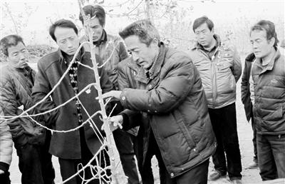 """天水秦安:30载潜心育种甘守清贫 庄稼汉成长为果树""""专家"""""""