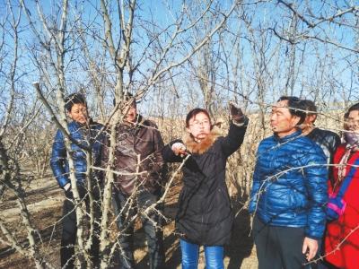 白银平川:林业工程师为椒农们讲解花椒树修剪技术