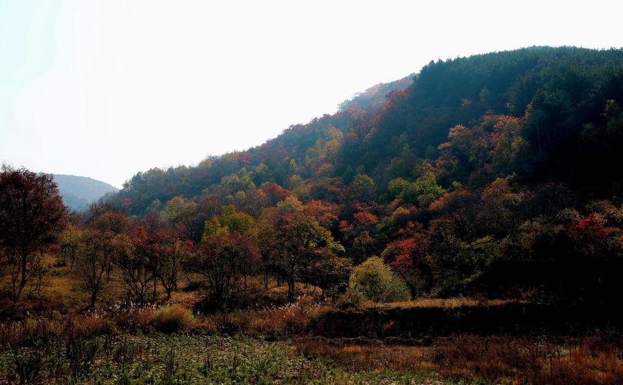 倾情呵护绿水青山 一举关闭128口油井 子午岭自然和谐之美又回来了