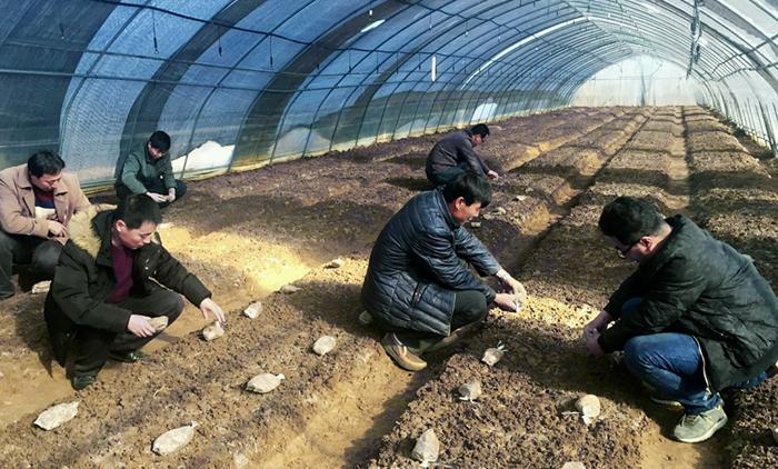 庆阳宁县:脱贫攻坚产业引导示范园富了山里人