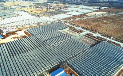 甘肃临夏国家农业科技园区连栋温室形成规模