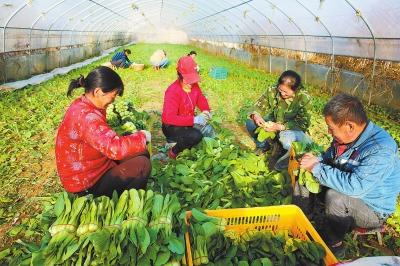 今年庆阳市宁县引导群众种植蔬菜23.1万亩