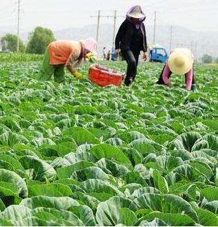 甘肃省蔬菜总体价格11月同比上升3%