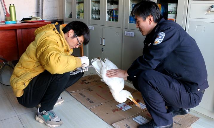 甘肃山丹:森林公安救助迁徙途中受伤鸟类