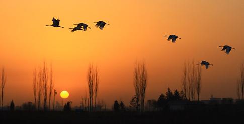 早安2018,张掖国家湿地公园