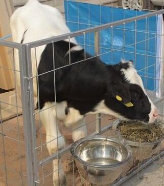 """甘肃省食药监局警示: """"生鲜奶"""" 不宜直接饮用"""