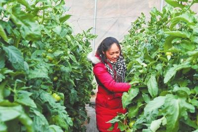 白银市平川区大力发展蔬菜种植(图)