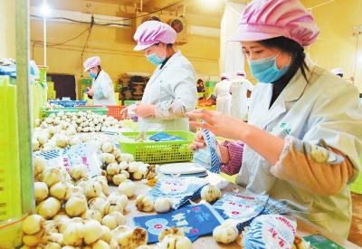 临夏州永靖县大力发展百合产业(图)