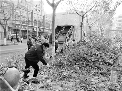 兰州城关区绿化所对城区行道树进行冬季修剪工作(图)