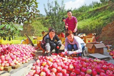 果园飘香富农家——聚焦平凉静宁、华亭、泾川果产业发展(图)
