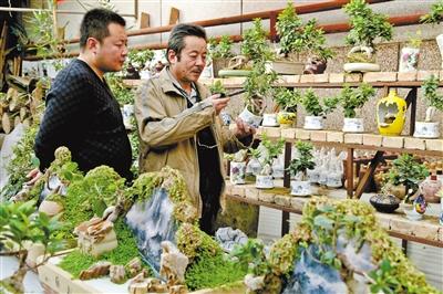平凉市崆峒区:小盆景秀出大市场