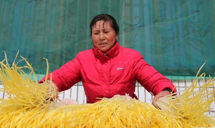 江苏海安:韭黄助力农民增收