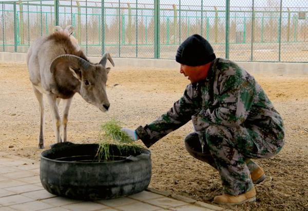 """甘肃阿克塞:""""野生动物医院""""成为自由精灵的栖息地"""